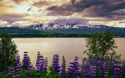 Islanda Senza Glutine Akureyri